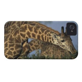 Africa, Kenya, Masai Mara Game Reserve, Giraffes iPhone 4 Case-Mate Case