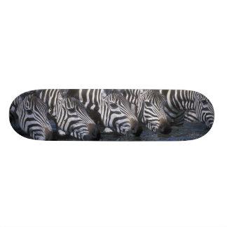 Africa, Kenya, Masai Mara Game Reserve, Plains Skateboards