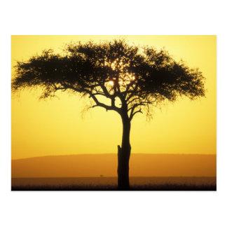 Africa, Kenya, Masai Mara Game Reserve, Rising Postcard