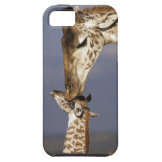 Africa, Kenya, Masai Mara. Giraffes (Giraffe iPhone 5 Covers