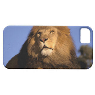 Africa, Kenya, Masai Mara. Male lion (Panthera Barely There iPhone 5 Case
