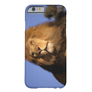 Africa, Kenya, Masai Mara. Male lion (Panthera Barely There iPhone 6 Case