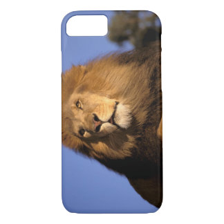 Africa, Kenya, Masai Mara. Male lion (Panthera iPhone 7 Case