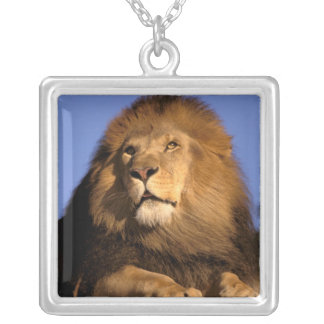 Africa, Kenya, Masai Mara. Male lion (Panthera Square Pendant Necklace