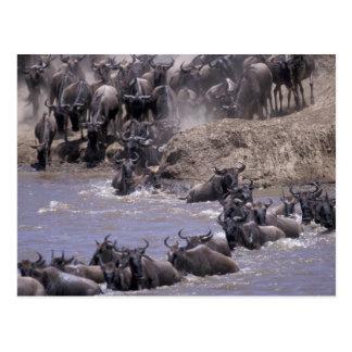 Africa Kenya Masai Mara National Park Post Cards