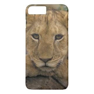 Africa, Kenya. Portrait of a lion. iPhone 7 Plus Case