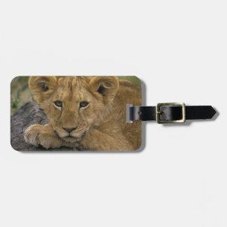 Africa, Kenya. Portrait of a lion. Luggage Tag