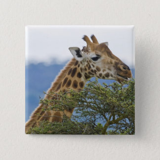 Africa. Kenya. Rothschild's Giraffe at Lake 15 Cm Square Badge