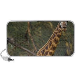 Africa. Kenya. Rothschild's Giraffe at Lake 2 Travelling Speaker