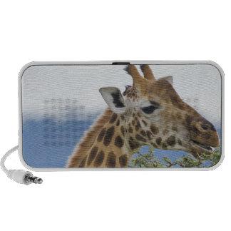 Africa. Kenya. Rothschild's Giraffe at Lake Travel Speaker