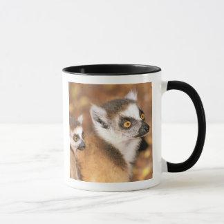 Africa, Madagascar, Berenty Private Reserve. Mug