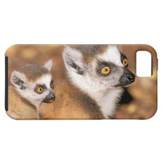 Africa, Madagascar, Berenty Private Reserve. Tough iPhone 5 Case