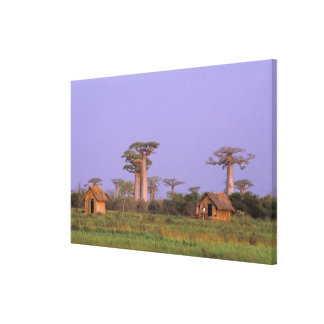 Africa, Madagascar, Morondava. Baobabs Stretched Canvas Print