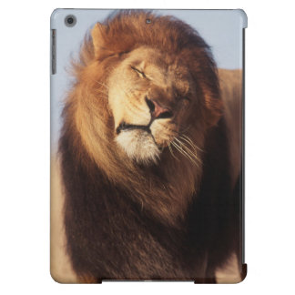 Africa, Male African Lion (Panthera Leo) iPad Air Covers
