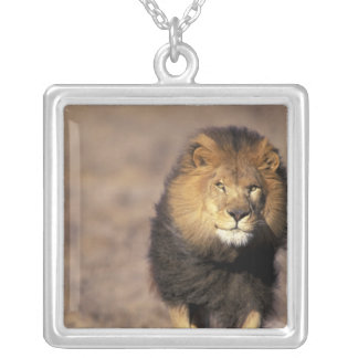 Africa. Male African Lion Panthera leo) Square Pendant Necklace