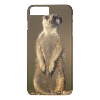 Africa, Namibia, Keetmanshoop, Meerkat (Suricate iPhone 7 Plus Case