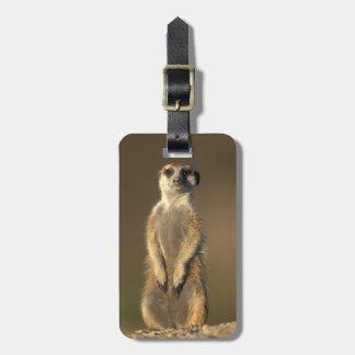 Africa, Namibia, Keetmanshoop, Meerkat (Suricate Luggage Tag
