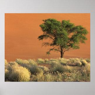 Africa, Namibia, Namib National Park, Sossusvlei Poster