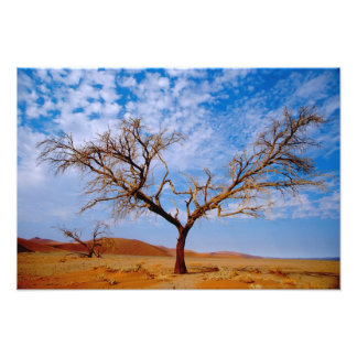 Africa, Namibia, Naukluft National Park, Photograph