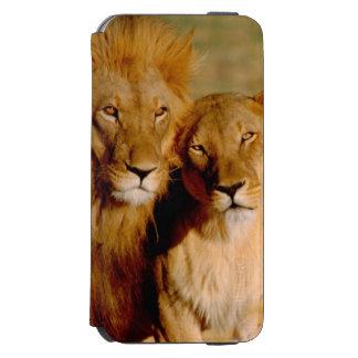 Africa, Namibia, Okonjima. Lion & lioness Incipio Watson™ iPhone 6 Wallet Case