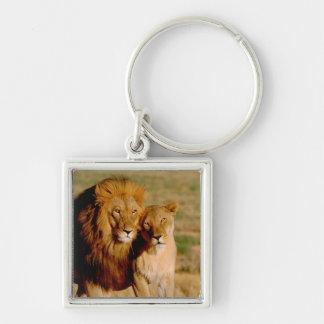 Africa, Namibia, Okonjima. Lion & lioness Keychains