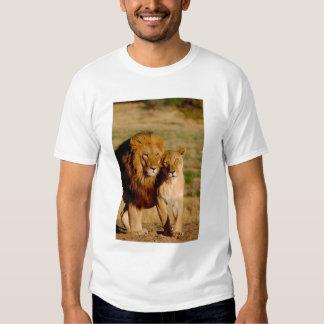 Africa, Namibia, Okonjima. Lion & lioness T Shirts