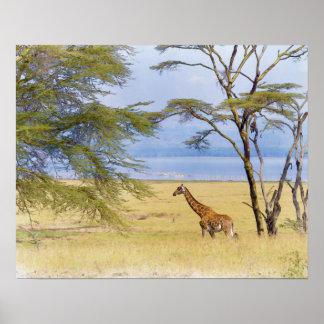 Africa Safari Giraffe Watercolor Painting Poster
