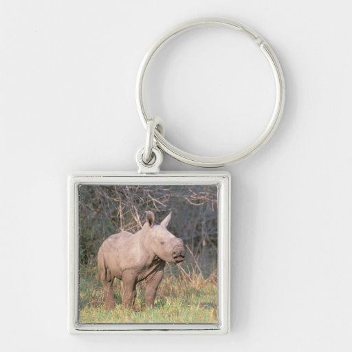 Africa, South Africa, Phinda Preserve. White Key Chains