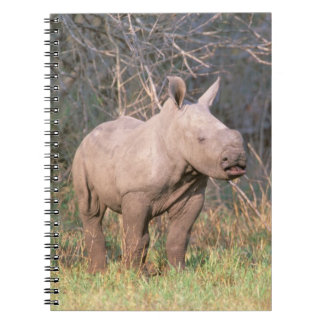 Africa, South Africa, Phinda Preserve. White Notebook
