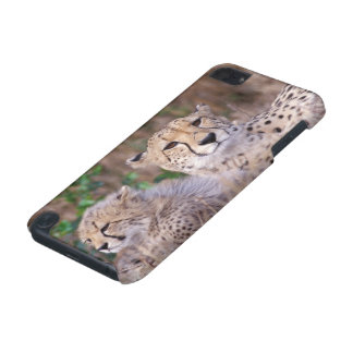 Africa, South Africa, Tswalu Reserve. Cheetahs iPod Touch 5G Covers