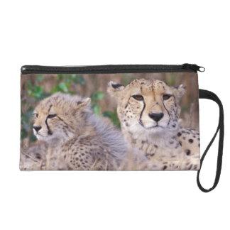 Africa, South Africa, Tswalu Reserve. Cheetahs Wristlet Purse
