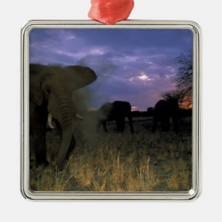 Africa, Tanzania. African elephant at sunset, Silver-Colored Square Decoration