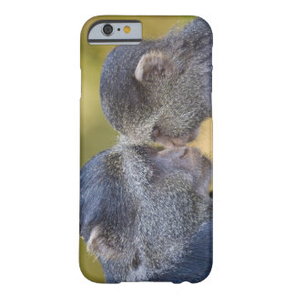 Africa. Tanzania. Blue Monkey mother with young Barely There iPhone 6 Case