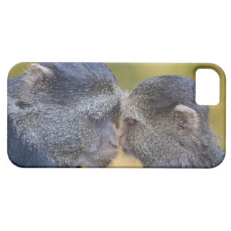 Africa. Tanzania. Blue Monkey mother with young Case For The iPhone 5