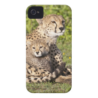 Africa. Tanzania. Cheetah mother and cubs 2 iPhone 4 Cases