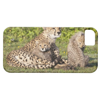 Africa. Tanzania. Cheetah mother and cubs 2 iPhone 5 Cases
