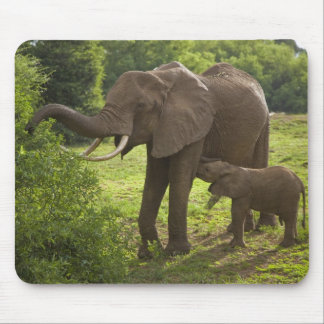 Africa. Tanzania. Elephant mother and calf at 2 Mouse Pad