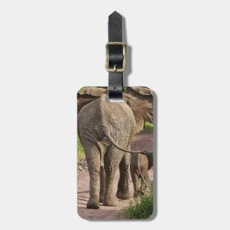 Africa. Tanzania. Elephant mother and calf at Bag Tag
