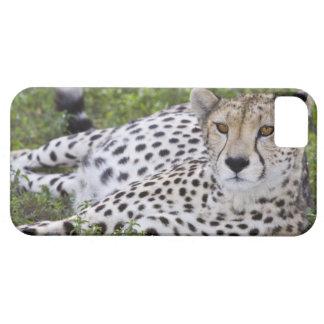Africa. Tanzania. Female Cheetah at Ndutu in the iPhone 5 Cover