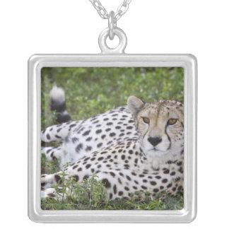 Africa. Tanzania. Female Cheetah at Ndutu in the Square Pendant Necklace