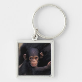 Africa, Tanzania, Gombe Nat'l Park,  Flirt, a Silver-Colored Square Key Ring