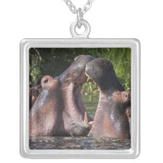 Africa. Tanzania. Hippopotamus sparring at the Square Pendant Necklace