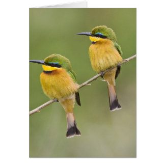 Africa. Tanzania. Little Bee Eaters at Manyara Greeting Card