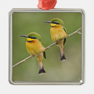 Africa. Tanzania. Little Bee Eaters at Manyara Christmas Ornament