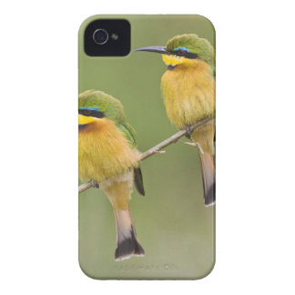 Africa. Tanzania. Little Bee Eaters at Manyara iPhone 4 Cover