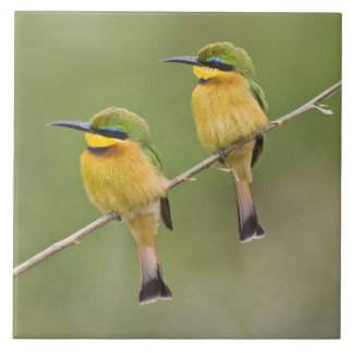 Africa. Tanzania. Little Bee Eaters at Manyara Large Square Tile