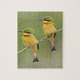 Africa. Tanzania. Little Bee Eaters at Manyara Puzzle