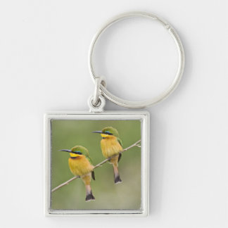 Africa. Tanzania. Little Bee Eaters at Manyara Silver-Colored Square Key Ring