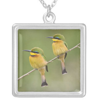 Africa. Tanzania. Little Bee Eaters at Manyara Square Pendant Necklace