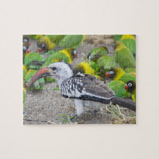 Africa. Tanzania. Red-billed Hornbill and Jigsaw Puzzle